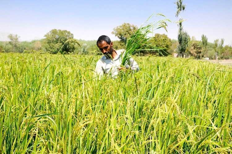 2 راه چاره افزایش بهره وری در کشاورزی یزد