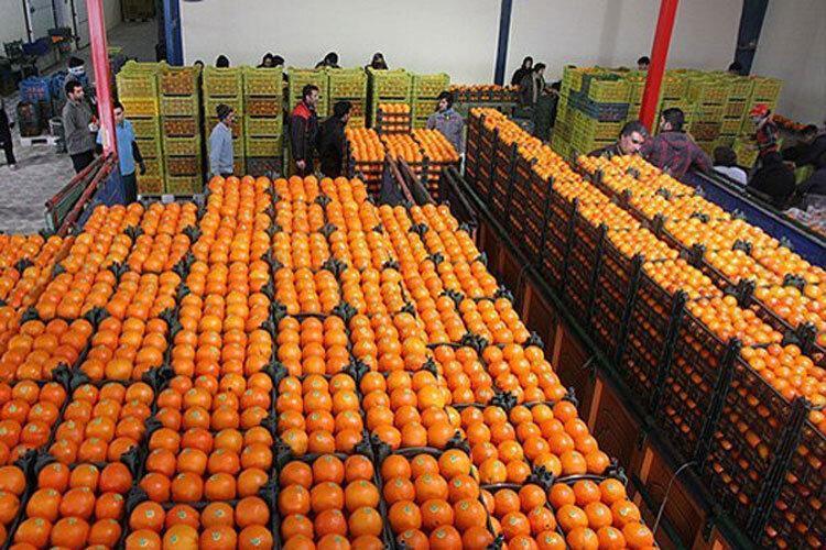 جرقه های تجارت مدرن کشاورزی در مازندران