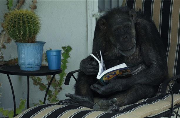 روایت زندگی شامپانزه تارزان در جشنواره سینماحقیقت