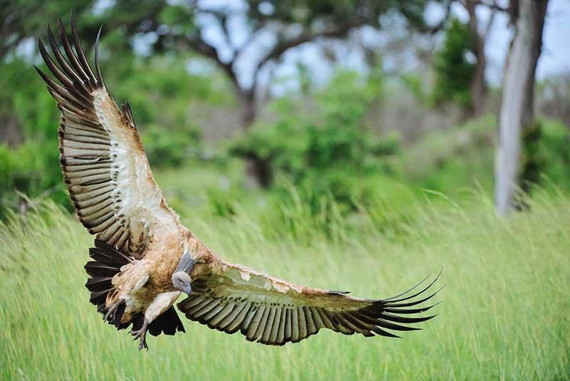 آشنایی با پارک ملی کروگر ، حیات وحش آفریقای جنوبی