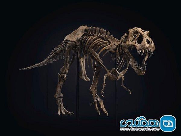 اسکلت دایناسور به گران ترین اثر یک حراجی تبدیل شد