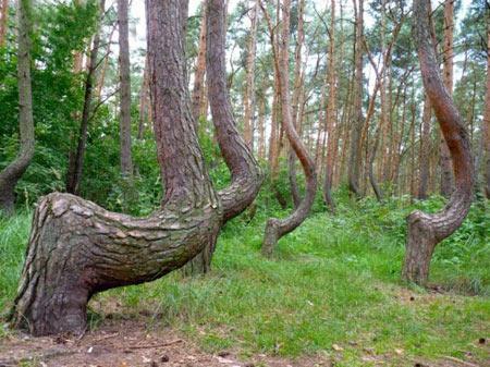 15 جنگل عجیب و غریب در جهان