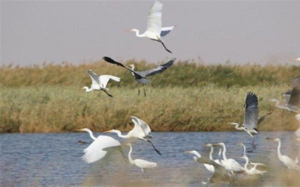 پرندگان مهاجر در بوستان آزادگان